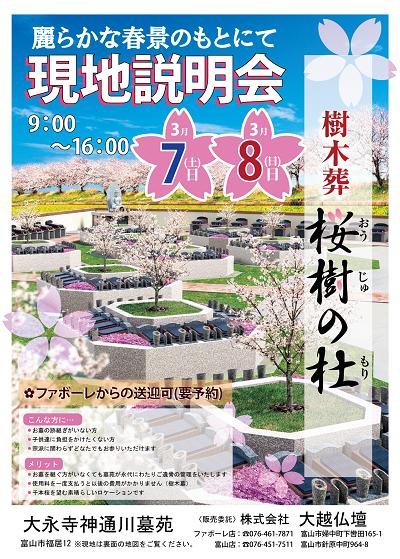 桜樹の杜3月0303